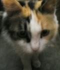 粉红色小猫m