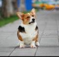 南京酷禧犬舍