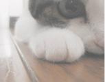 寳}゛_限糧蝂