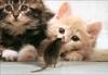 小猫和老鼠