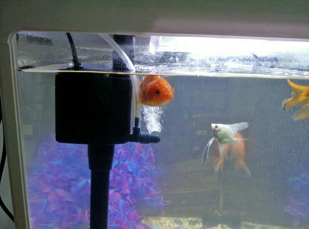 小金鱼变懒了吗?
