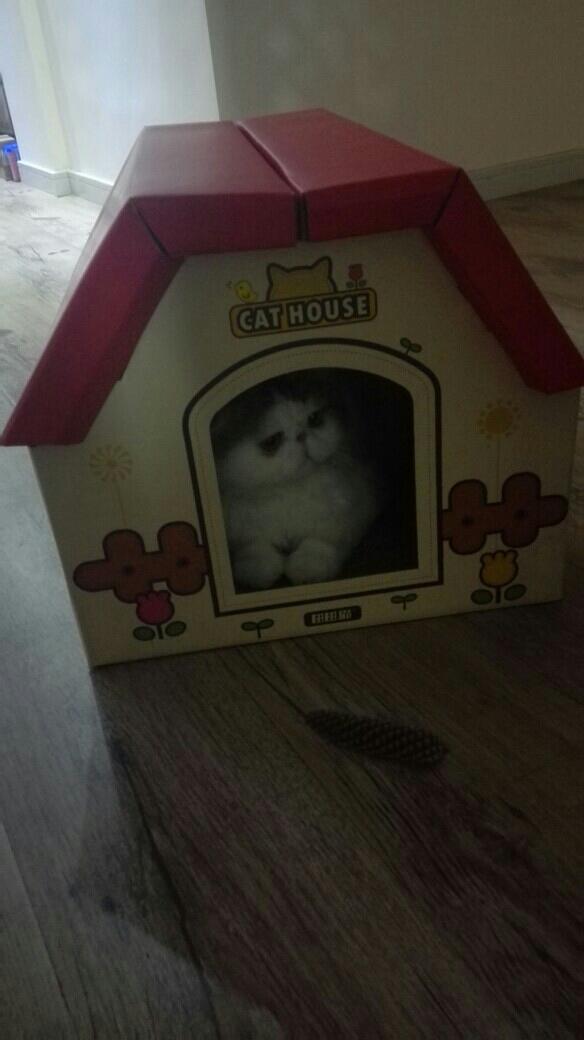 【晒单】田田猫 瓦楞纸组合房子 独立空间带磨爪纸箱盒子猫窝 家里的老二挺喜欢这个猫屋的,两只猫在外面打架完了,老二待里面去了,看起来是不是特别萌代金券买的,特别划算 发表于 2016-09-18 22:06:53
