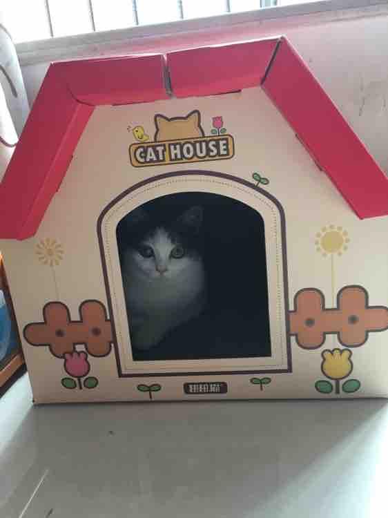 田田猫瓦楞纸组合房子 独立空间带磨爪纸箱盒子猫窝