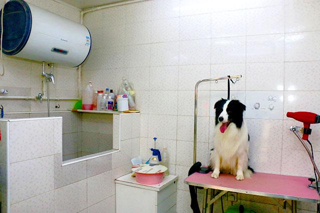 30平宠物店装修效果图