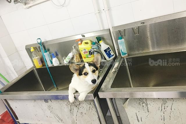 威尔森&潘宠物生活馆-上海波奇服务