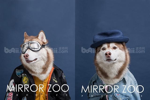 镜子动物园宠物摄影