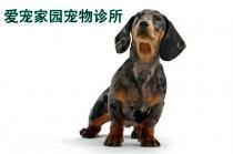 【七宝】爱宠家园宠物诊所 宠物体检套餐A