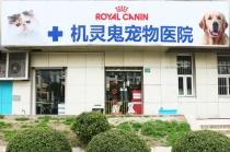 【源深体育中心】上海机灵鬼宠物医院 犬猫体检套餐