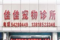 【虹梅路】佳佳宠物诊所 公猫绝育套餐(针麻)