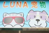 【中山北路/甘泉地区】露娜LUNA宠物 100元美容代金券