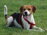 一例公犬睾丸肿瘤的启示