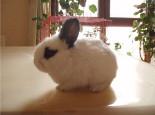 兔兔为什么会互咬
