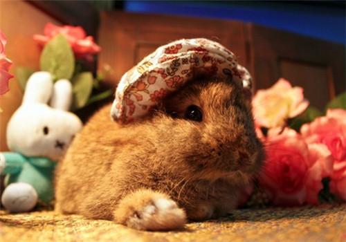教你在玩乐中发现可疑病兔