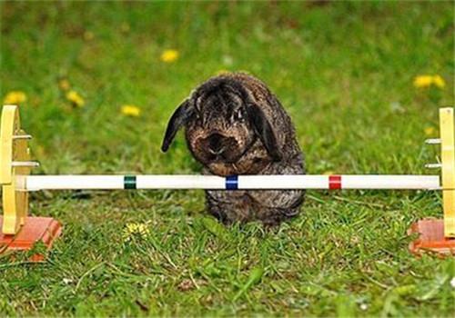"""训练兔子的两个""""不能"""""""
