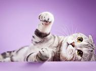 猫的泛白细胞减少症