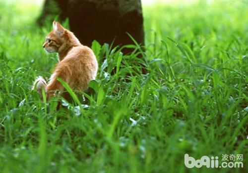 草丛是蜱虫的活动场所
