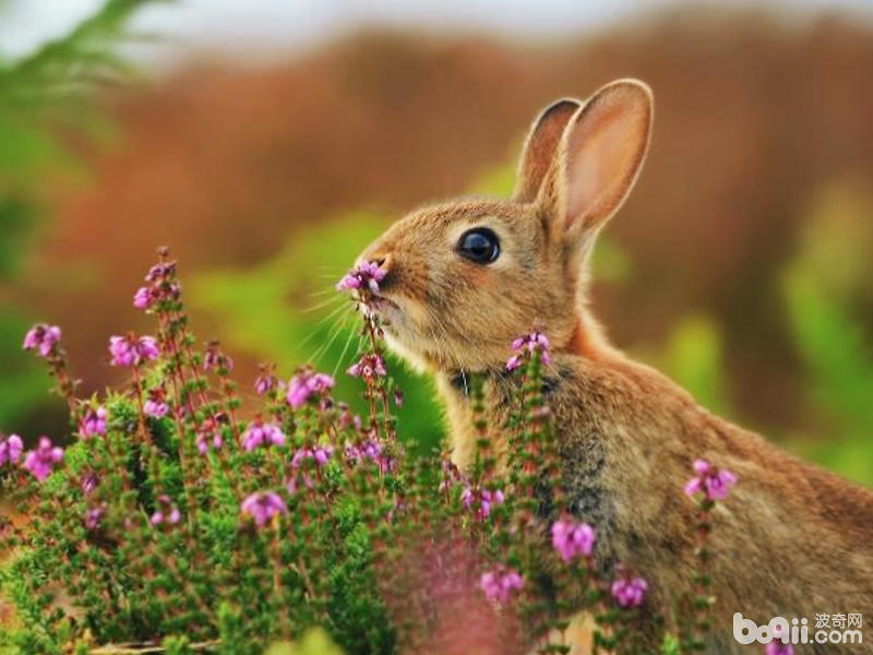 怎样预防兔异食症