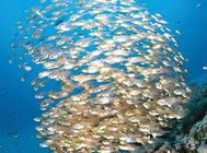 鱼类麻醉的方法