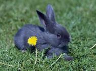 兔子打疫苗要注意什么