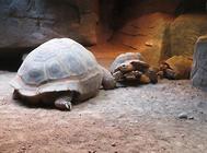龟缸中龙须草怎么饲养?