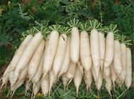 春季适合哪些蔬菜播种繁殖