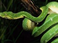蛇食物投喂原则有哪些