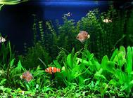 鱼缸造景中常见的水草品种