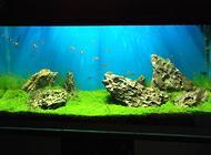 如何自制生态鱼缸