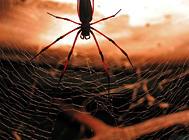 宠物蜘蛛平时吃什么
