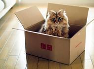 大红鹰娱乐场在线为什么喜欢箱子