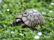 乌龟也会得抑郁症?