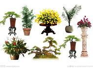 花卉病虫害的环保型防治法
