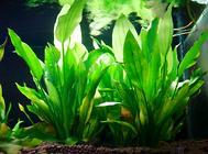 水草在鱼缸中的作用