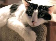 猫抓沙发太烦恼如何解决