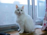 长毛猫的护理方法,如何给长毛猫洗澡和护理