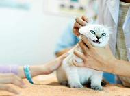 猫为什么要绝育?