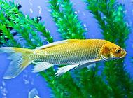 鱼鳍充血的原因都有哪些?