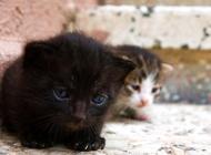 收养流浪猫要怎么处理