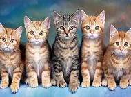 猫怎么训练?猫训练方法