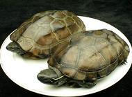 乌龟该怎么喂养?