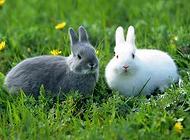 兔子拉稀(腹泻)要怎么办?