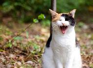 猫食欲不振怎么办?猫食欲不振原因分析