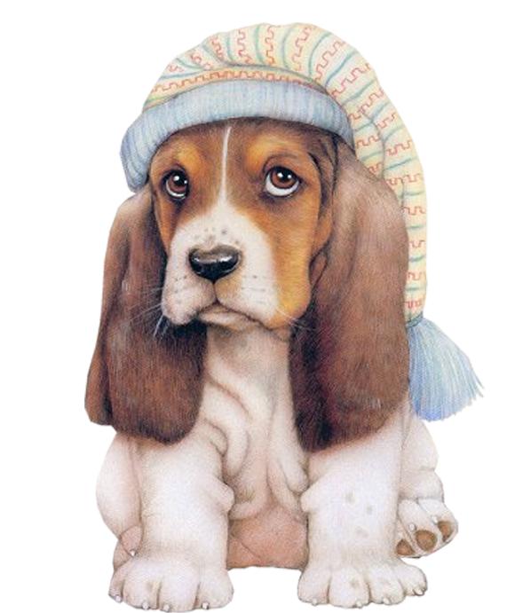 英国史宾格猎犬