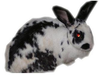 巨型格仔兔