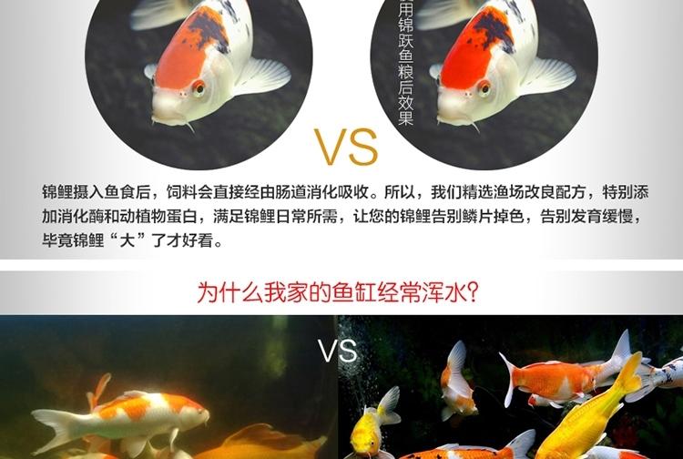锦跃锦鲤饲料鱼食锦鲤鱼饲料色扬螺旋藻金鱼饲料金鱼鱼食锦鲤鱼食