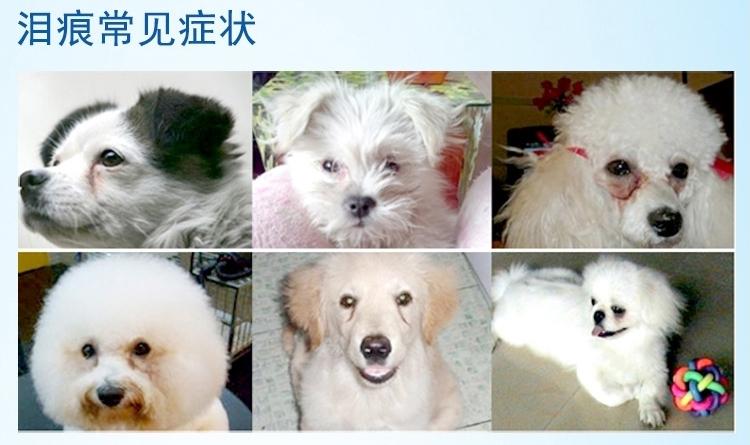 新宠之康 猫狗用亮洁消炎滴眼液 60ml 专业去泪痕