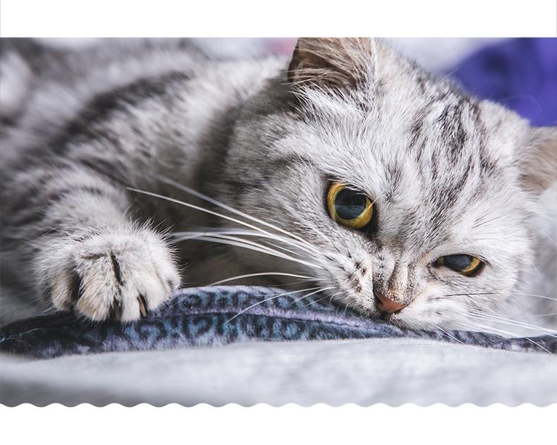 比乐 原味真系列全期猫粮 2kg