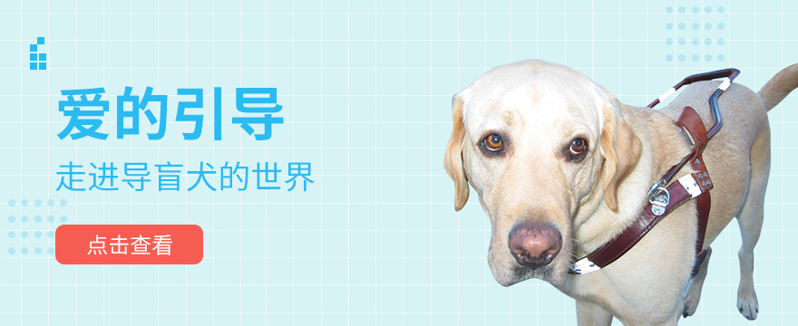 爱的引导:导盲犬乘地铁,遇见请别害怕我